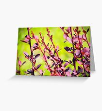Extremely green nature background. Red leaves of Berberis. Spring photo Greeting Card