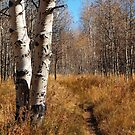 Quaking Aspens in Cathedral Meadow by Jared Manninen