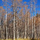 An Autumn Walk Through Cathedral Meadow by Jared Manninen