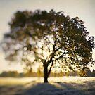 The Joy Tree by ALICIABOCK