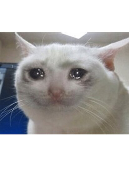 «gato llorando» de IbraTV