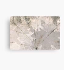 White leaf texture. Maple leave. Modern nature texture Canvas Print