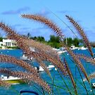 Cattails in the wind by triciamary