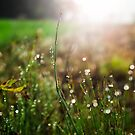 Morning Dew by koreanrooftop