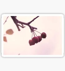 Vintage photo of the red fruits drizzled with raindrops. Soft pastel colors. Nature Sticker