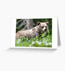 Grizzly Bear Cub  Greeting Card