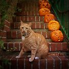 The cutest pumpkin by Lynn Starner
