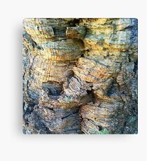 Cork Tree Canvas Print