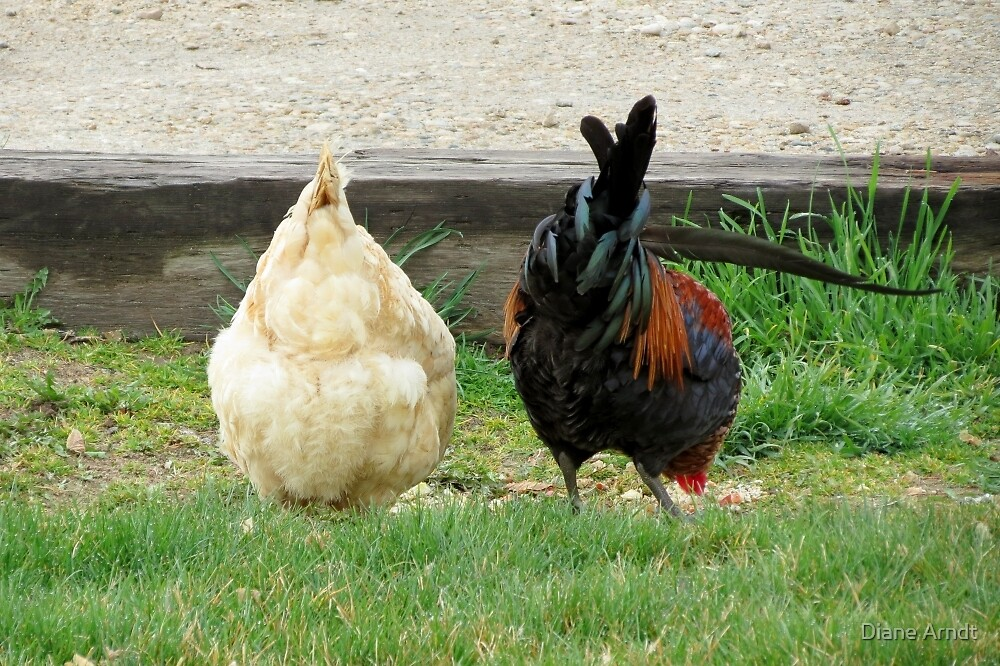 Fowl Butts by Diane Arndt