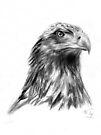 Eagle Portrait by Mui-Ling Teh