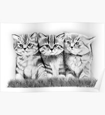 Pussy Cats Poster