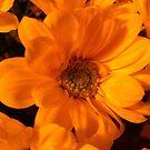 Dark Flower by DES PALMER