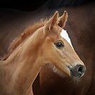 Cute foal by Nicky Stewart