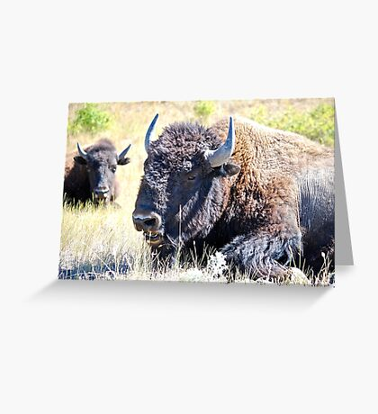 Don't mess with me. Greeting Card