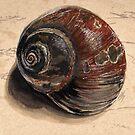 Moon Snail by Daks