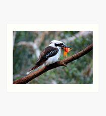 The Kookaburra Thief Art Print