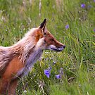 Fox in the wildflowers by peggieprints