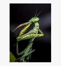 Praying Mantis  Photographic Print
