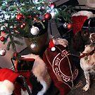 Christmas - Brock`s Stocking ! by John Dalkin