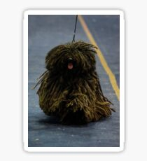 The Puli is a small-medium breed of Hungarian herding and livestock guarding dog  Sticker