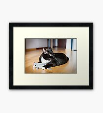 Cat playing with mouse-toy Framed Print