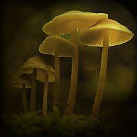 Tiny wonders by EbyArts