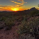 Sonoran Desert Sunset by Sue  Cullumber