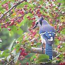 Bird of art by pastoralcity