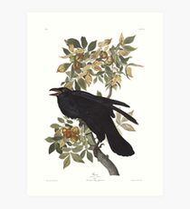 Raven - John James Audubon Art Print