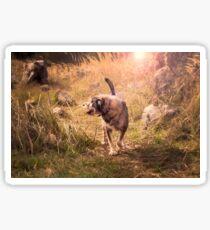 Happy senior mongrel dog on a walk Sticker