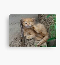 Red Tabby Kitten Feels Itchy Canvas Print