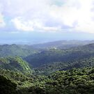 El Yunque by Paula Bielnicka