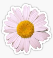 Pink Daisy Sticker