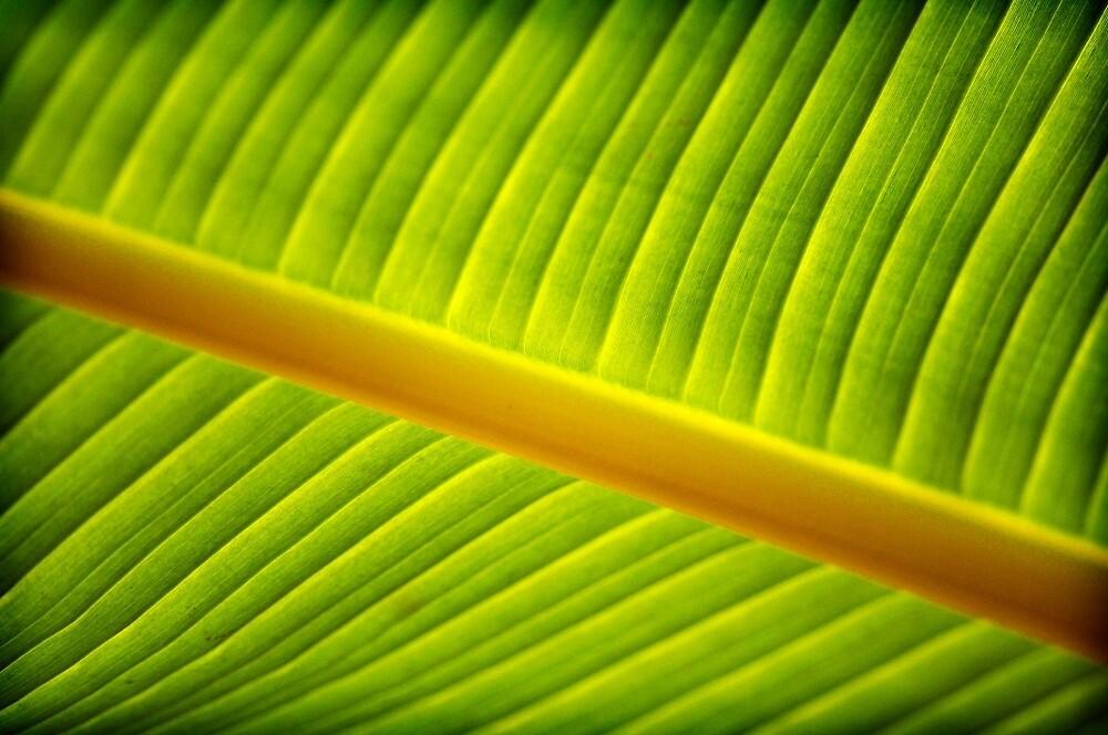 Leaf by pvraghav