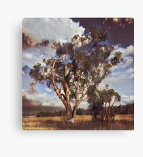 Australian Windswept Tree 01 Canvas Print