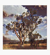Australian Windswept Tree 01 Photographic Print