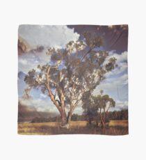 Australian Windswept Tree 01 Scarf