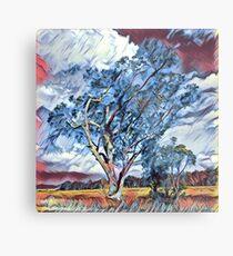 Australian Windswept Tree 02 Metal Print