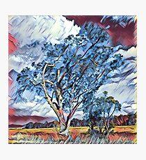 Australian Windswept Tree 02 Photographic Print
