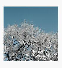 White landscape Photographic Print