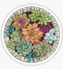 succulents in a stone circle Sticker