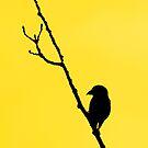 Sunbird by Lori Peters