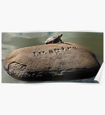 Inspire (Panoramic) - Turtle Sunning Itself Poster