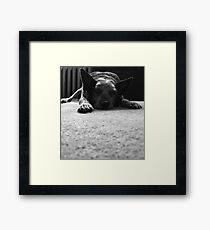 my pup Framed Print