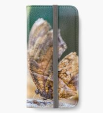 Macro Photo Old Butterfly iPhone Wallet/Case/Skin
