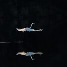 Flying away by Alessandra Antonini