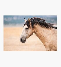 Buckskin Beauty Photographic Print