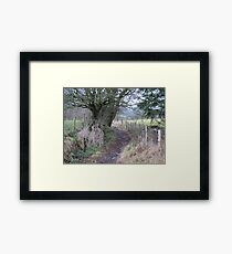 Ancient path Framed Print