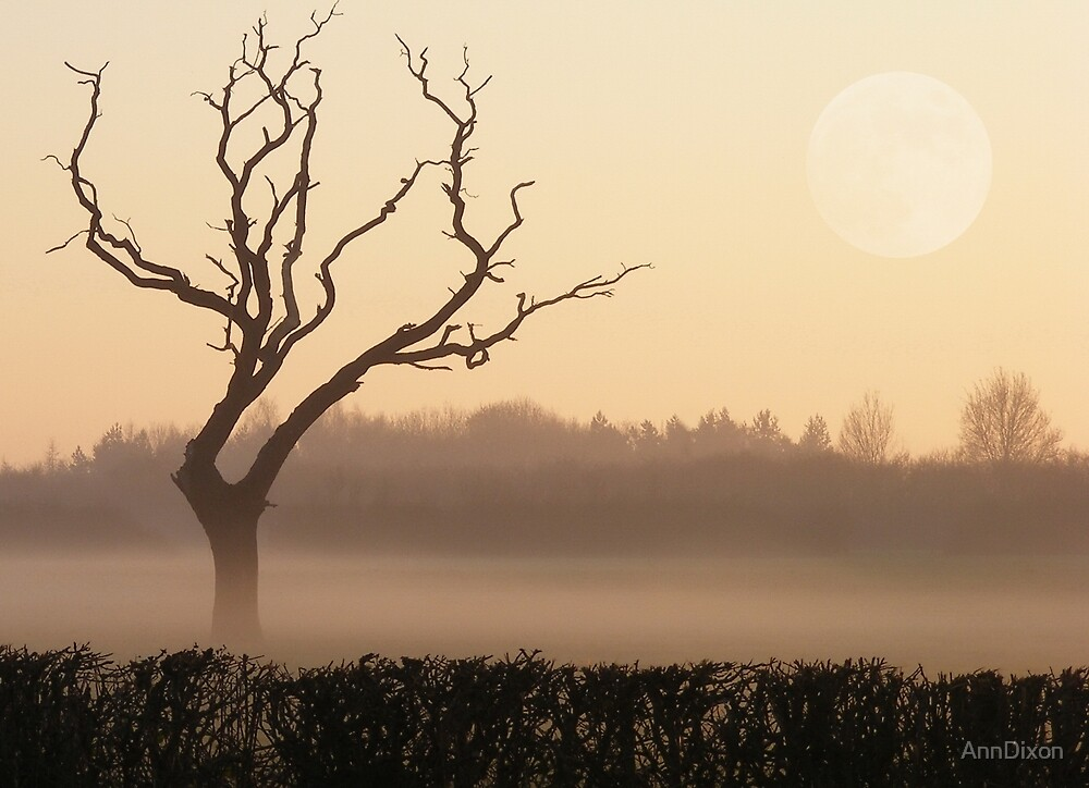 Quot Lonesome Old Tree In A Winter Sunset Quot By Anndixon Redbubble
