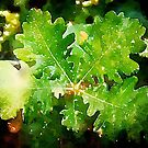 Oak Leaves by Douglas E.  Welch